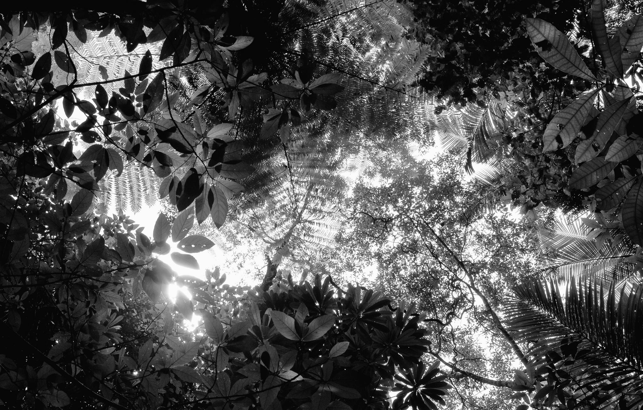 Dschungelcamp, ich liebe dich