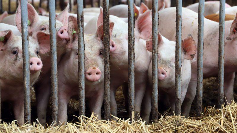 Parteien und ihre Tierschutzprogramme